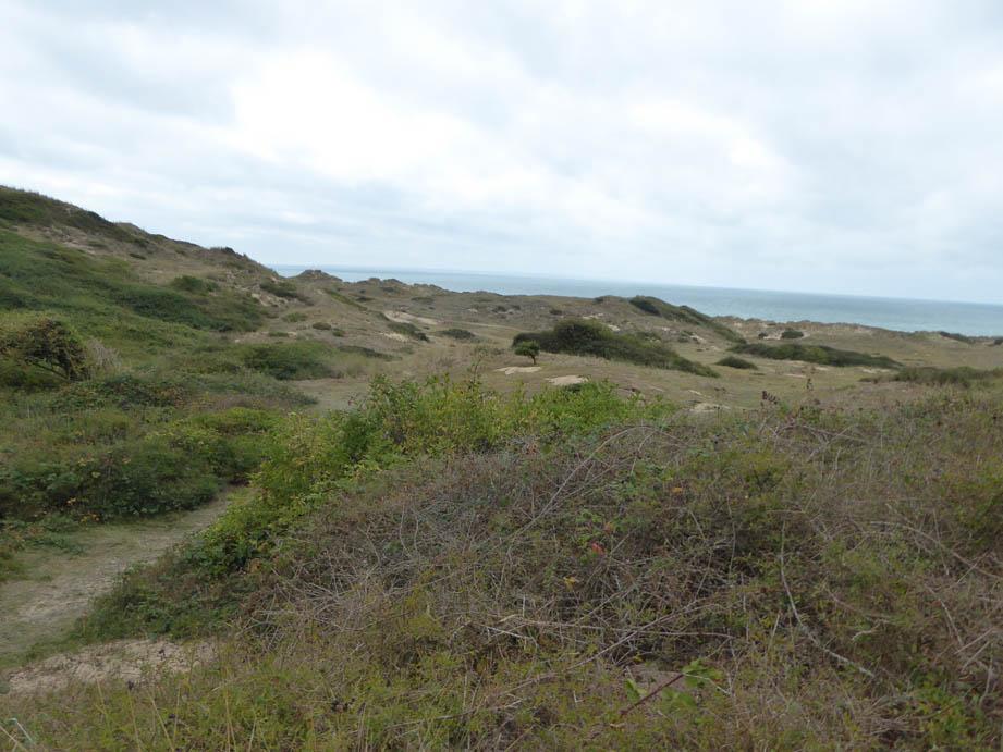Dunes2C