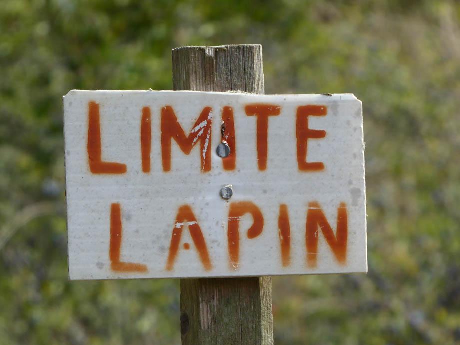 LapinsC